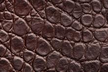Crocodile Skin. A Fragment Of Crocodile Skin.