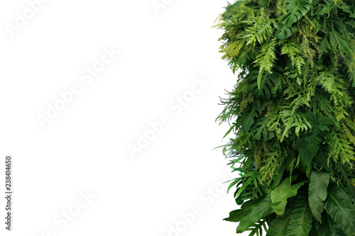 Fotografia  Tropical leaves foliage plant bush, vertical green wall nature backdrop border on white background with clipping path