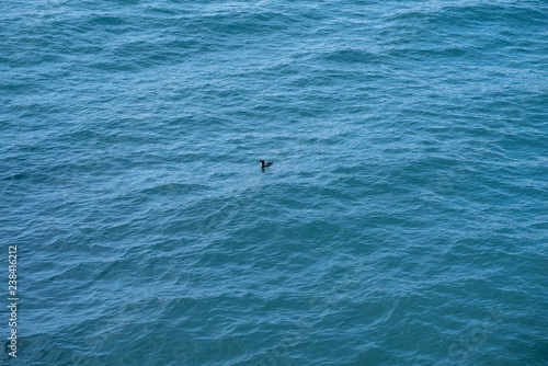 Fotografie, Obraz  Lonely black bird on wavy sea water surface