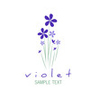 Bouquet of wild violets isolated on white background.
