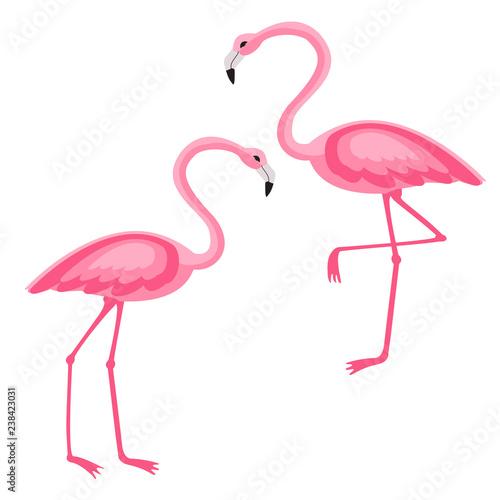 Canvas Prints Flamingo Pink Flamingo isolated vector illustration
