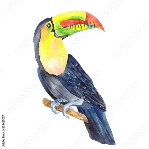 Akwarela ilustracja z tropikalną papugą