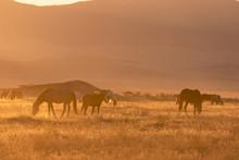 Wild Horses In The Utah Desert