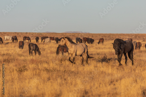 Photo  Wild Horses in the Utah Desert