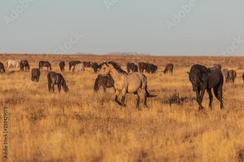 Photo  Wild Horses in the Utah Desert