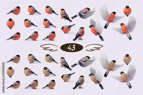 Murais de parede vector bullfinch flock set
