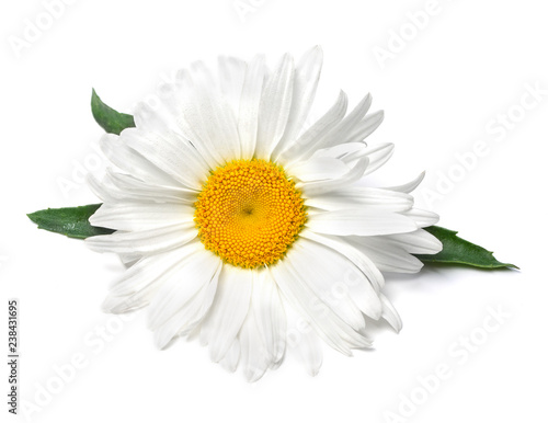Deurstickers Madeliefjes Beautiful chamomile flower