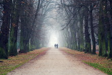 Couple Holding Hands Walking In Beautiful Romantic Autumn Alley, Cloudy Foggy Day, Partner Issues Psychology Relationship Concept, Prague Game Reserve Hvezda, Czech Republic