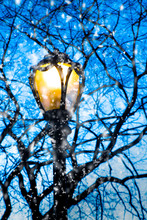 Lamp Post And Tree Branches As...