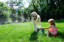 Side View Of Girl Spraying Water On Dog With Sprinkler In Yard