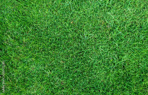 Foto auf Gartenposter Grun Green grass texture for background. Green lawn pattern and texture background.