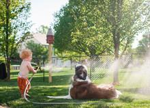 Boy Spraying Water On Pet Dog ...