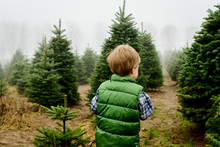 Rear View Of Baby Boy Standing On Field At Christmas Tree Farm During Foggy Weather