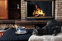 Tabby Cat Relaxing By Food And...