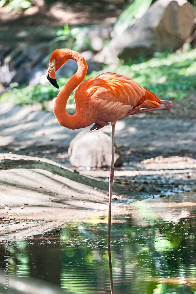 Flamingo steht auf einem Bein