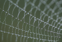Close Up Of Wet Spider Web