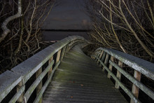Wooden Footbridge Amidst Branches In Forest At Everglades National Park During Night