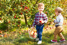 Two Cute Kids Picking Apples In A Garden