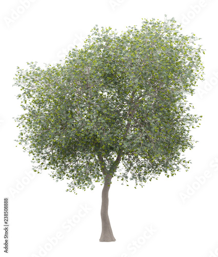 Papiers peints Oliviers olive tree with olives isolated on white background