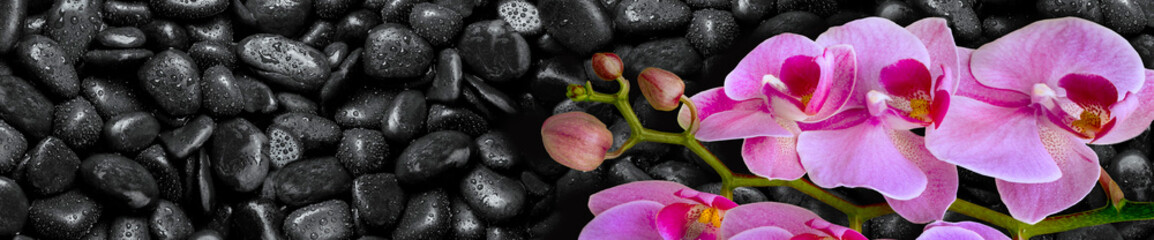 Fototapeta Do kuchni Pink Orchid lies on black stones