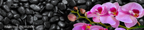 Pink Orchid lies on black stones