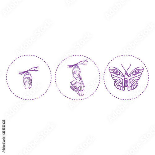 Butterfly and metamorphosis period vector drawing Fototapete