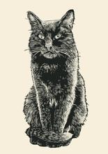 Black Cat. Engraving Style. Vector Illustration.