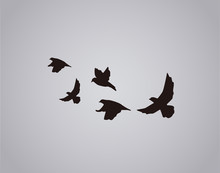 Vector Silhouette Flying Birds On White Background. Bird Tattoo