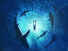 Illustration Of Sharks Forming A Circle Under A Man In Water