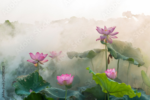 Stampa su Tela lotus flower blossom