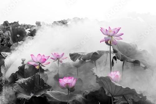 Foto auf Gartenposter Lotosblume lotus flower blossom