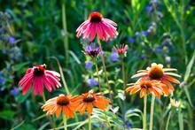 Botanic Garden, Honeybees On C...