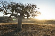 Sun Shines On Tree In Namibia