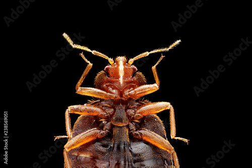 Bed Bug Canvas-taulu