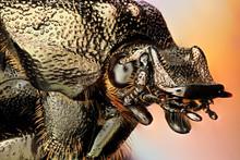 Beetle Head, Corinth, Vermont