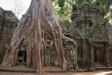 Ta Prohm , Angkor ,  Cambodia, Was Inscribed On The UNESCO-WHL 1992. The Ancient Temple Where Roots Of The Jungle Trees Intertwine With The Masonry Of These Ancient Structures Producing Surreal World.