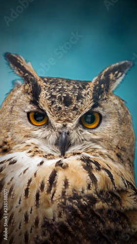 A close look of the orange eyes of a horned owl on a blured background.