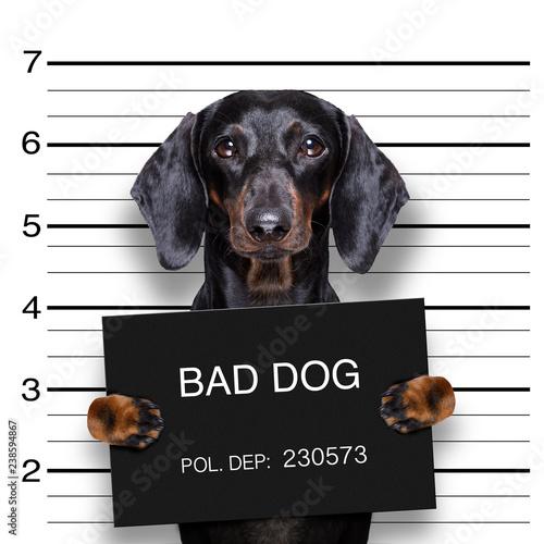 In de dag Crazy dog dachshund police mugshot