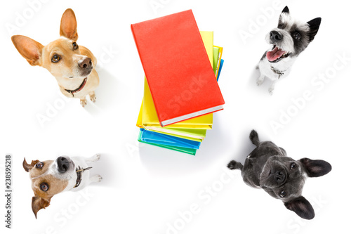 Tuinposter Crazy dog office worker businessman couple of team dogs