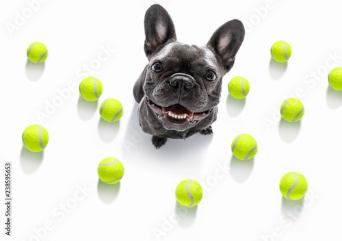 Tuinposter Crazy dog dog play tennis ball