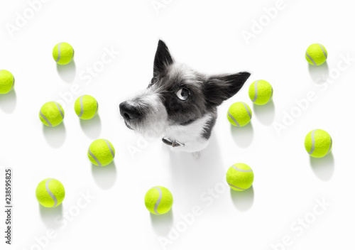 Foto op Aluminium Crazy dog tennis tournament dog