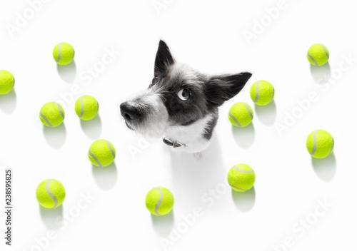 Staande foto Crazy dog tennis tournament dog