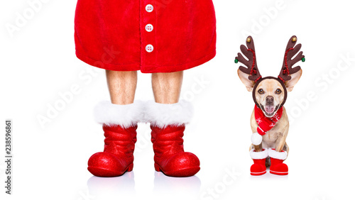 Foto op Aluminium Crazy dog christmas santa claus dog