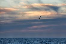 Seagull In Dusk