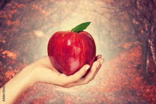 Fotografía Woman hand holding big red apple