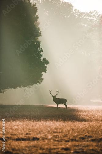 portret-jelenia