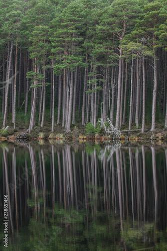 Fotografie, Tablou  Caledonian Forest