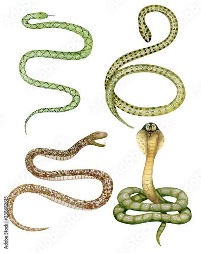 Watercolor snakes set Canvas Print