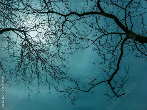 Wallpaper Mural Bare thin branches of winter trees against a eery hazy sky.