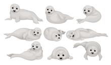 Flat Vector Set Of Funny Gray Seal Pups In Different Poses. Animal Of Arctic Or Atlantic Ocean. Marine Mammal